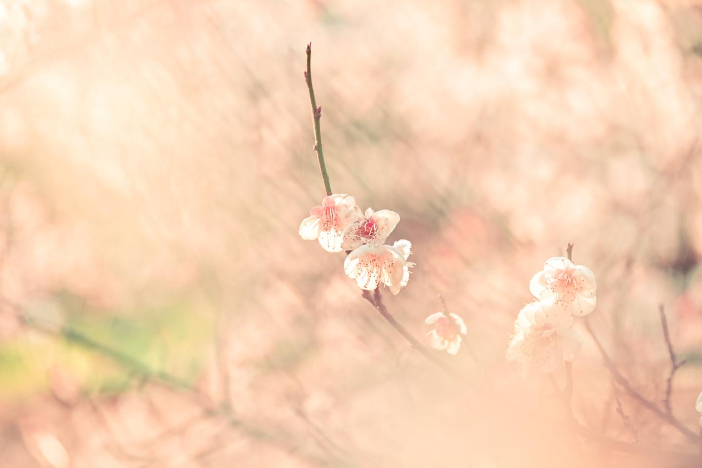 前ボケ×花で春の空気感を表現する – ふんわりとしたボケをつくる基本と撮影のコツ