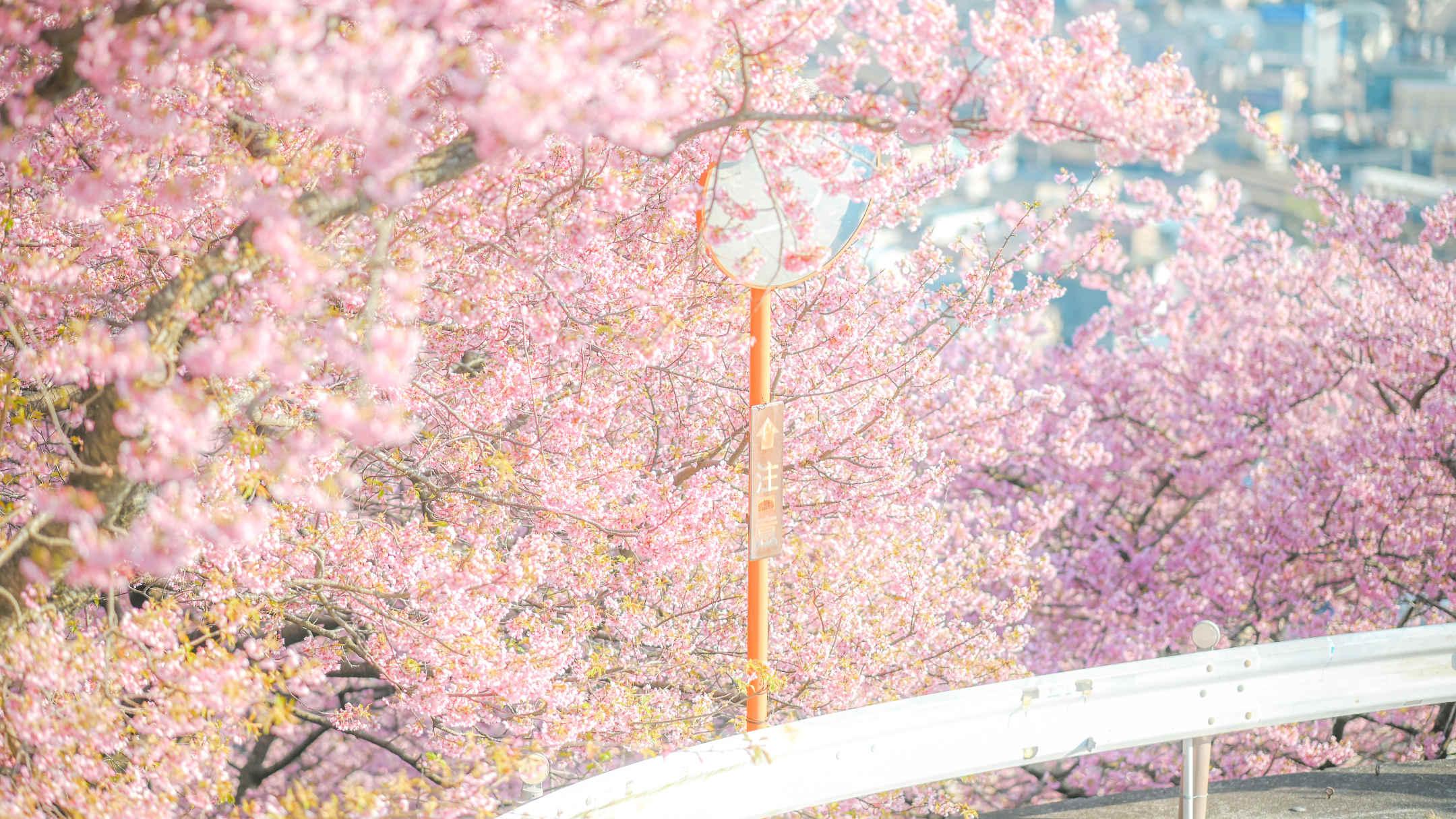 春のふんわりパステルフォト – 風景や光を生かした6つのテクニック