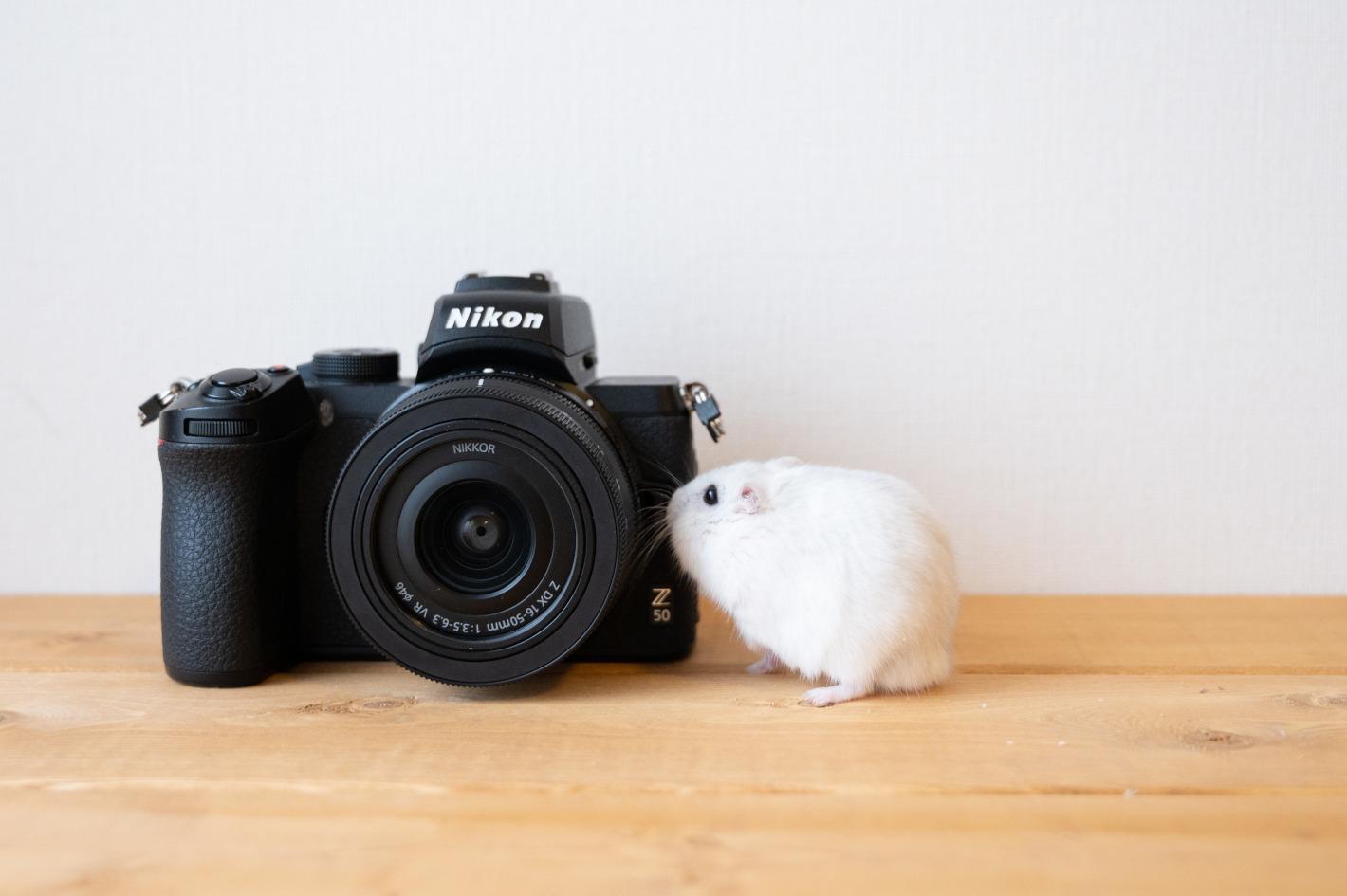 お気に入りのカメラと一緒だと毎日がもっと楽しい!9人の写真家が感じたZの魅力