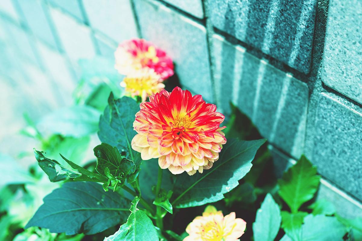 Z 7、NIKKOR Z 24-70mm f/2.8 S / photo by mikata.