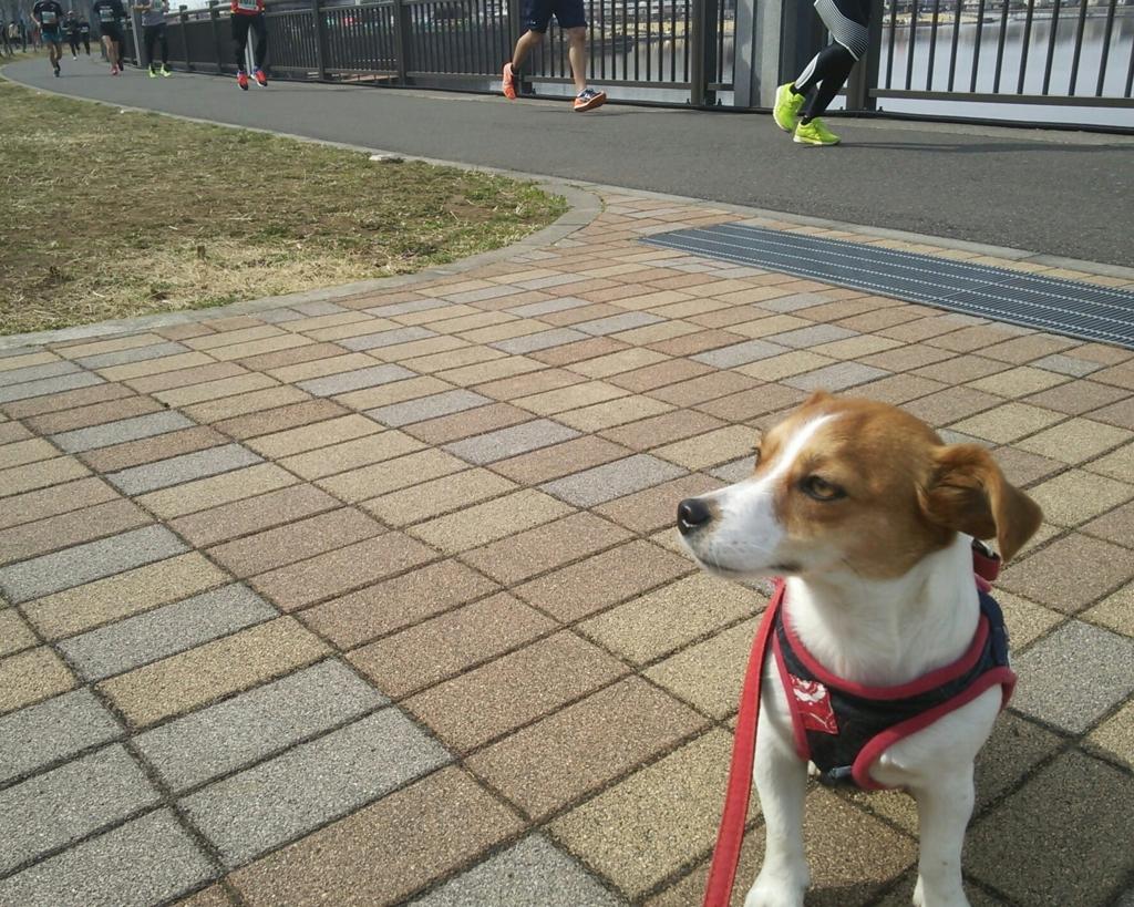 f:id:nicosugi:20170312132146j:plain