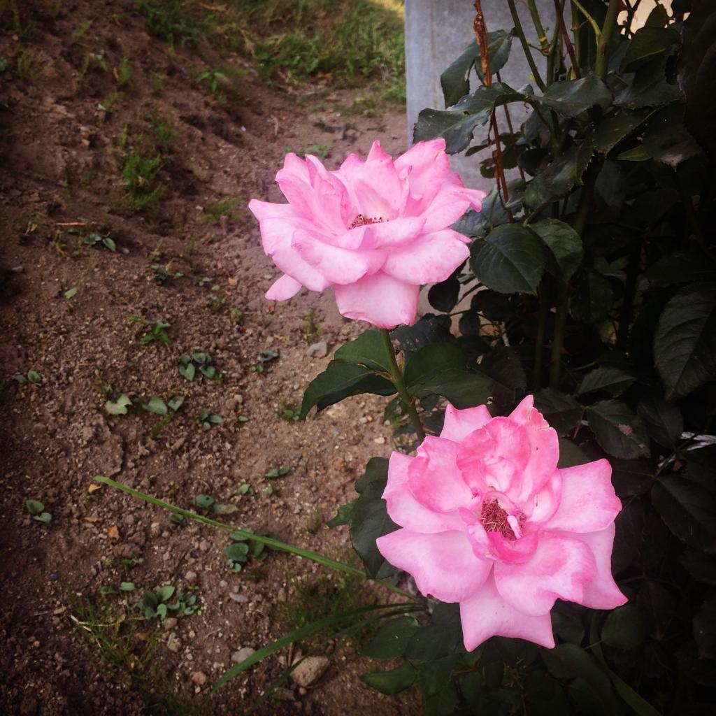 f:id:nigatsu_hatsuka:20160814084223j:plain