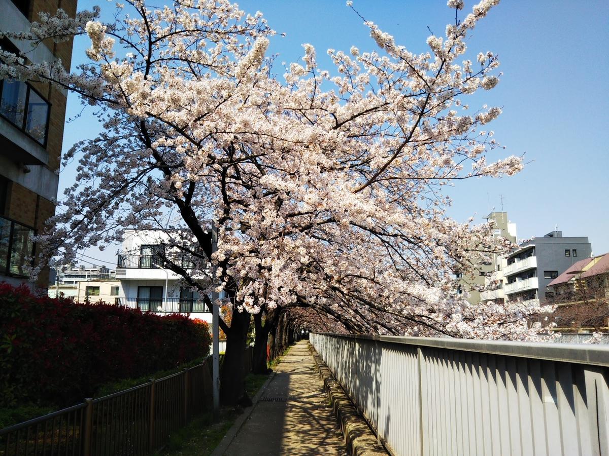 仙台堀川の遊歩道