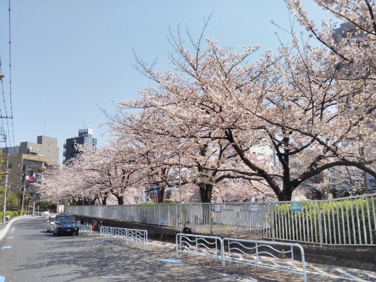 門前仲町の桜並木