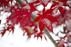 小雪/日本道観総本部