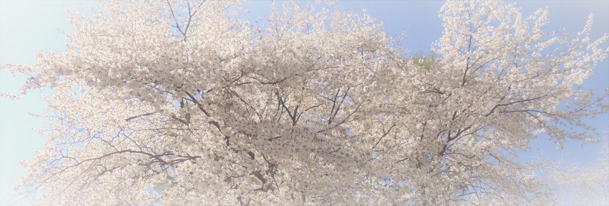 f:id:nihonganomori:20190514203157j:plain