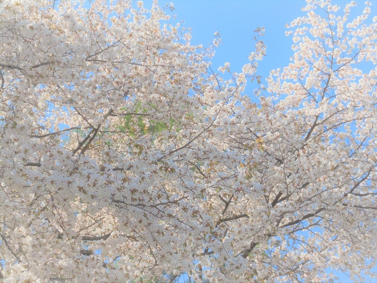 f:id:nihonganomori:20190514203248j:plain