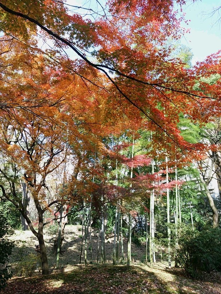 f:id:nihongo1000:20151221111736j:plain