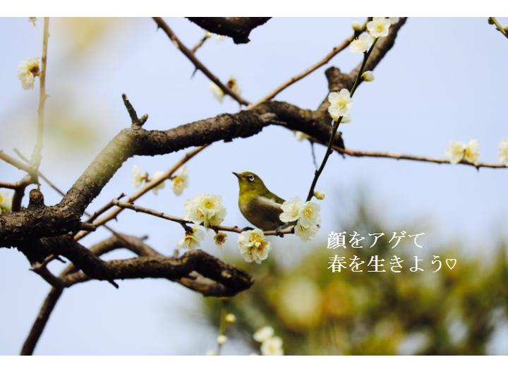f:id:nihonnokokoro:20170308181338j:plain