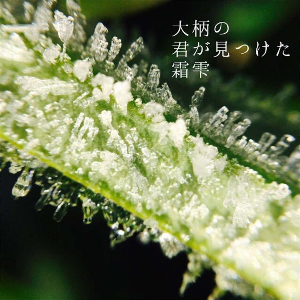 f:id:nihonnokokoro:20180113222212j:image