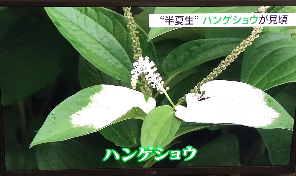f:id:nihonnokokoro:20180703182823j:image