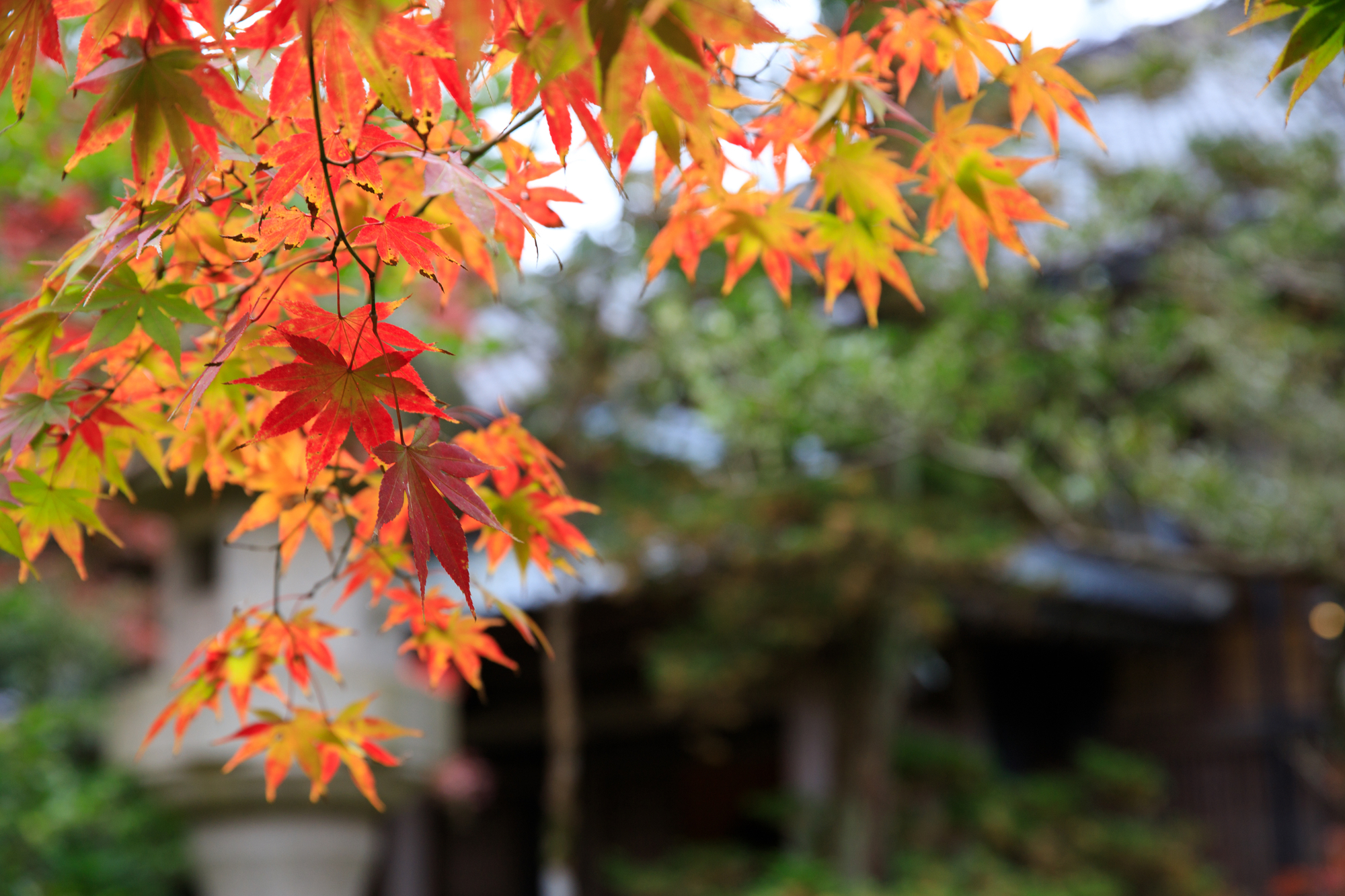 中野邸記念館 紅葉