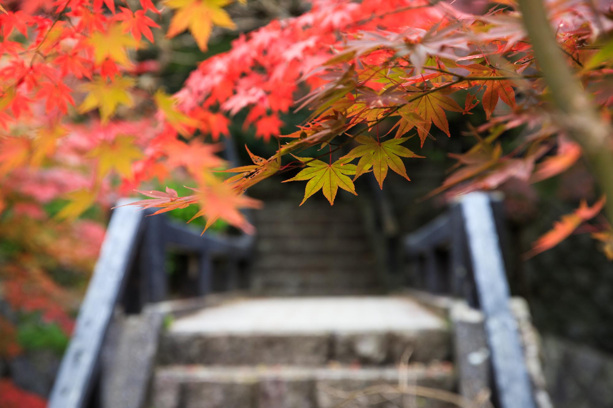 中野邸記念館 泉恵園 紅葉