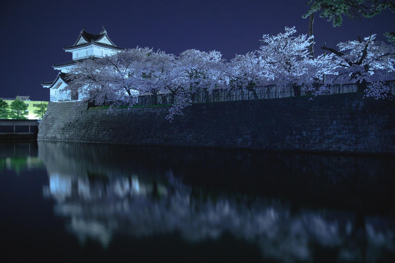新発田城址公園 夜桜