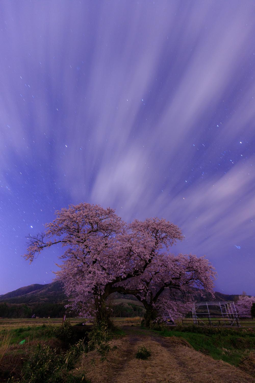 上堰潟公園 夜桜