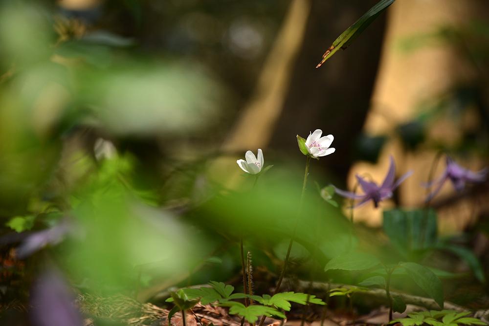 f:id:niigata-sanpo:20210401213959j:plain