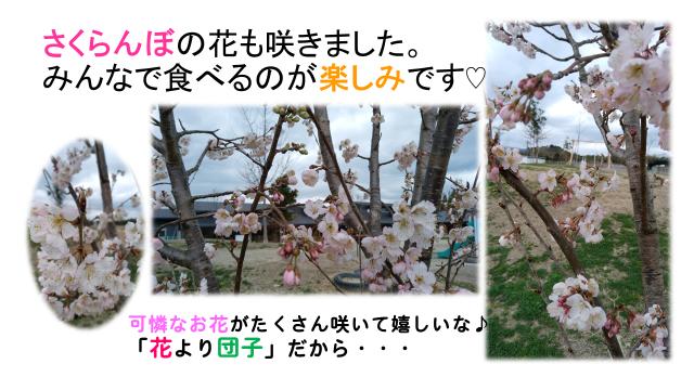 f:id:niji-nooka:20190322123523p:plain