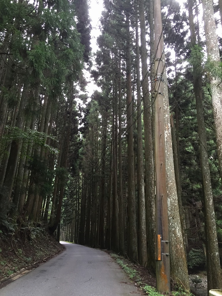 f:id:nijiirotakaramono:20160627122058j:plain