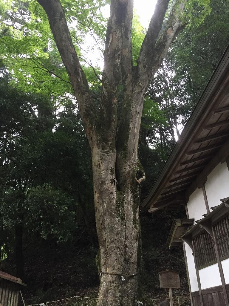 f:id:nijiirotakaramono:20160627122954j:plain