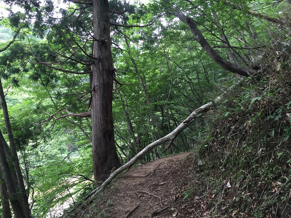 f:id:nijiirotakaramono:20160714135221j:plain