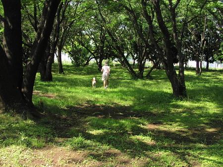 f:id:nijinotsumiki:20070607113012j:image