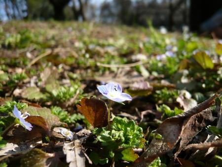 f:id:nijinotsumiki:20080315152207j:image