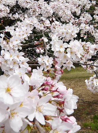 f:id:nijinotsumiki:20080327132806j:image