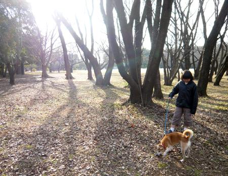 f:id:nijinotsumiki:20090108142836j:image