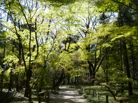 f:id:nijinotsumiki:20090407131657j:image