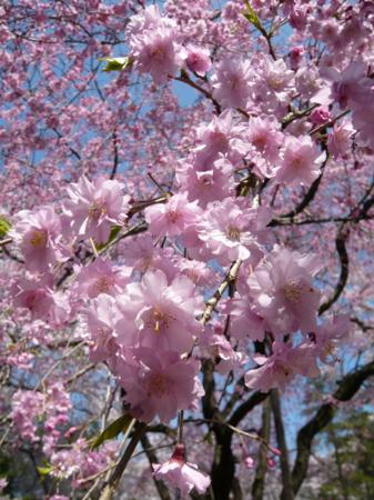f:id:nijinotsumiki:20090407134713j:image