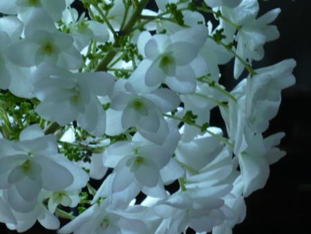 f:id:nijinotsumiki:20090612075553j:image