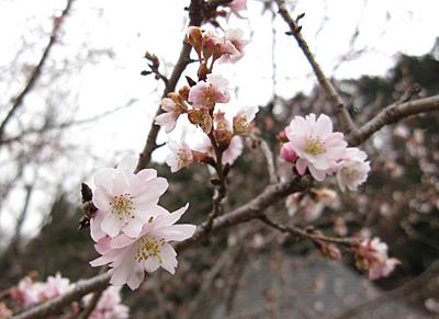f:id:nijinotsumiki:20091128141105j:image