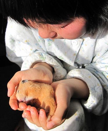 f:id:nijinotsumiki:20100313085325j:image