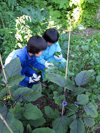f:id:nijinotsumiki:20100713174657j:image