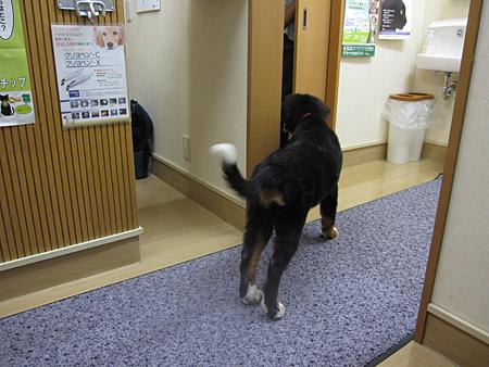 f:id:nijinotsumiki:20100819182222j:image