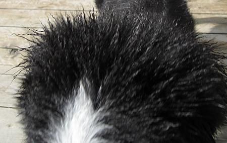 f:id:nijinotsumiki:20100902081208j:image