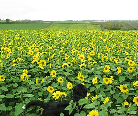 f:id:nijinotsumiki:20101013062702j:image