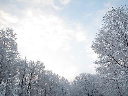 f:id:nijinotsumiki:20101111064714j:image
