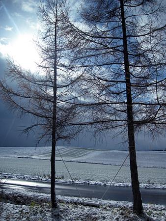 f:id:nijinotsumiki:20101115112514j:image