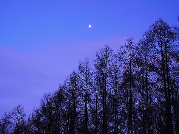 f:id:nijinotsumiki:20101217155928j:image