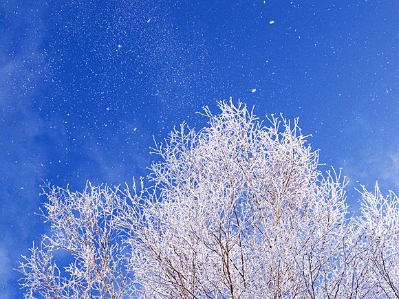 f:id:nijinotsumiki:20110127185538j:image
