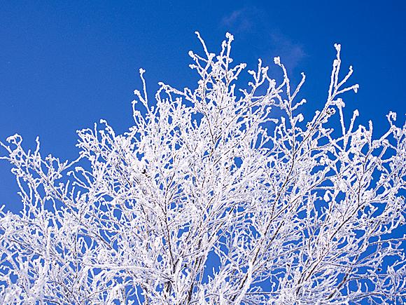 f:id:nijinotsumiki:20110127190437j:image