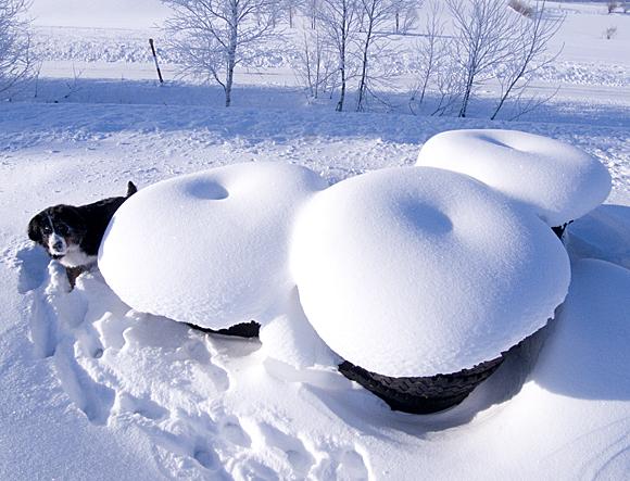 f:id:nijinotsumiki:20110129210951j:image