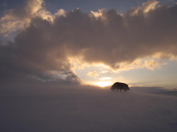 f:id:nijinotsumiki:20110208173308j:image