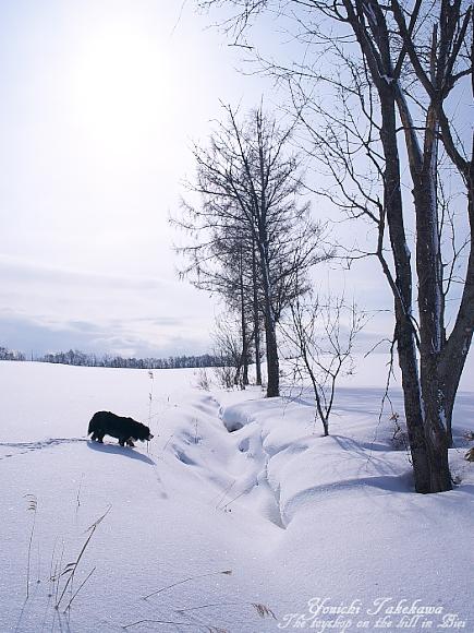 f:id:nijinotsumiki:20110311130231j:image