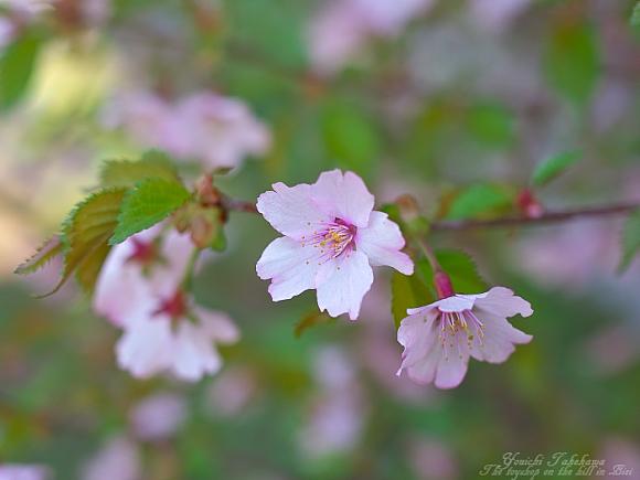f:id:nijinotsumiki:20110525082154j:image