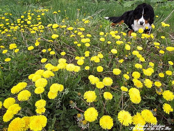 f:id:nijinotsumiki:20110529190551j:image