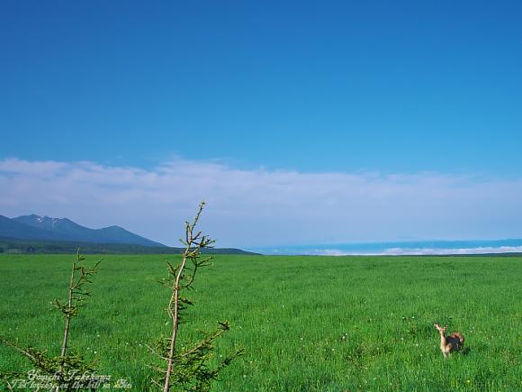 f:id:nijinotsumiki:20110626195037j:image