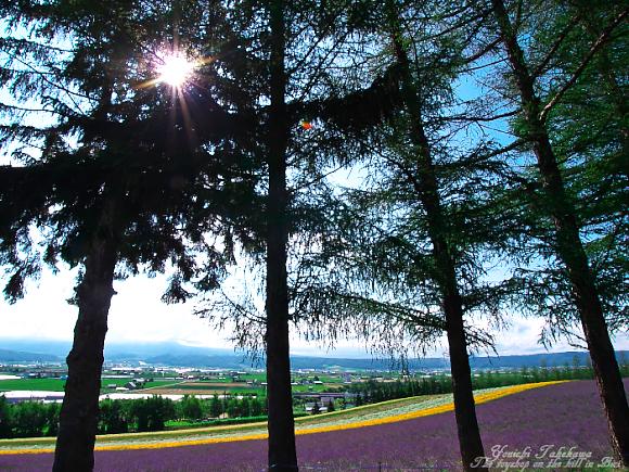 f:id:nijinotsumiki:20110801195823j:image
