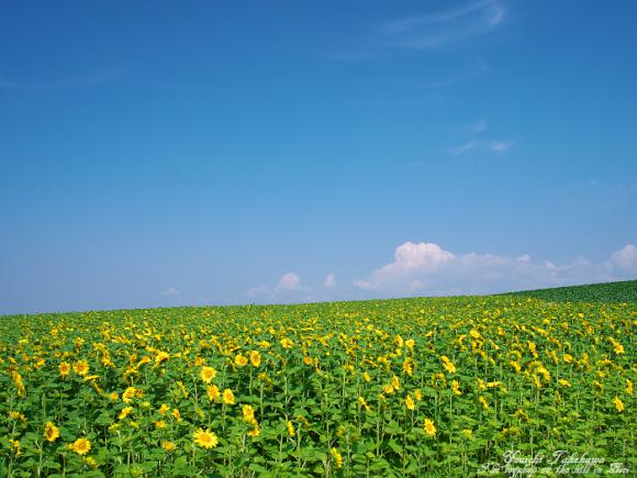f:id:nijinotsumiki:20110805080817j:image